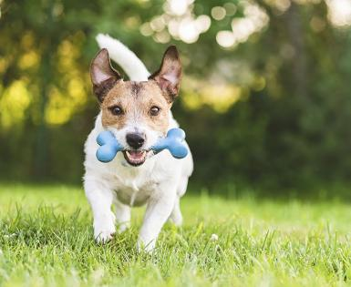 does my dog have ear mites - article card