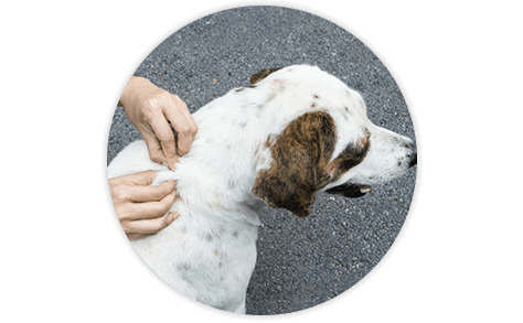 Searching a dog thoroughly for ticks