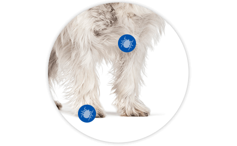 Tick markers indicating the front legs down to the paws and between and under the toes