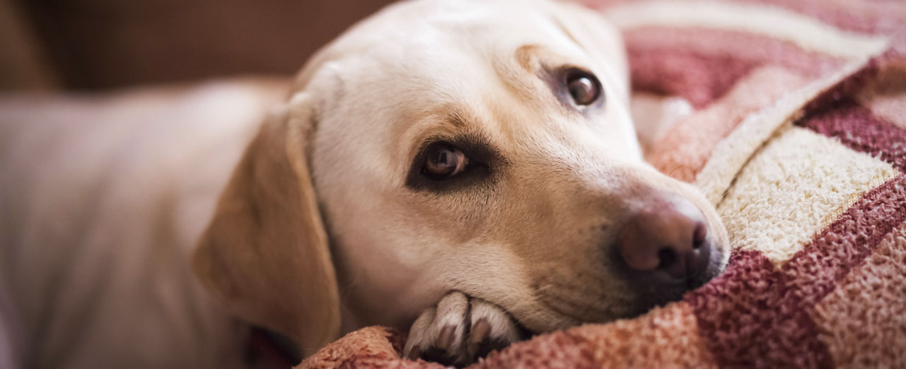 intestinal worms in dogs 2